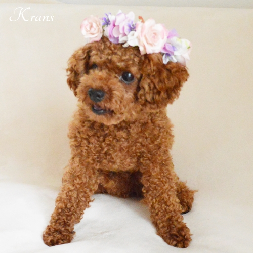 犬のピンクローズ花冠(アクセサリー)