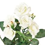 花言葉白いバラホワイトローズ