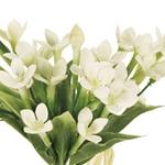 花言葉花冠サリューブバリア