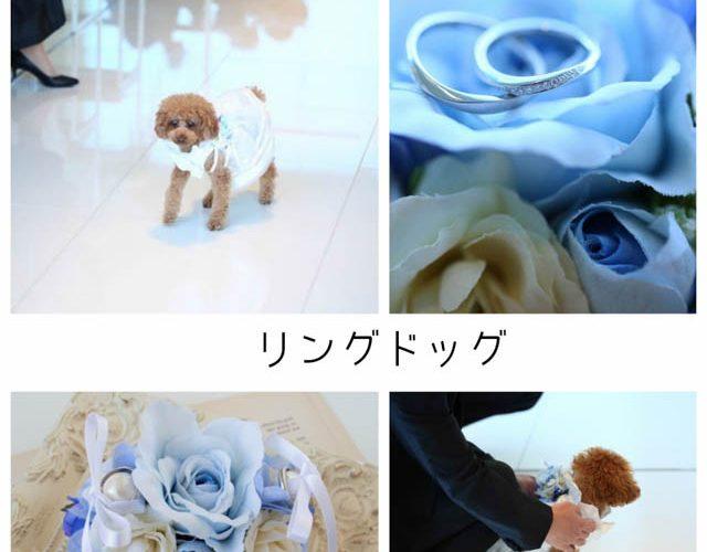 結婚式で結婚指輪を運ぶリングドッグトイプードル
