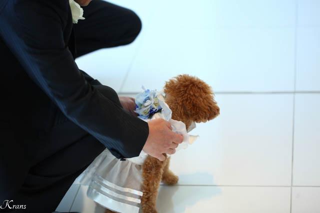 リングドッグ結婚式4