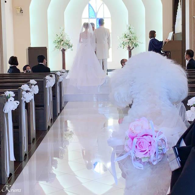 トイプードル結婚式ウェディングドッグ
