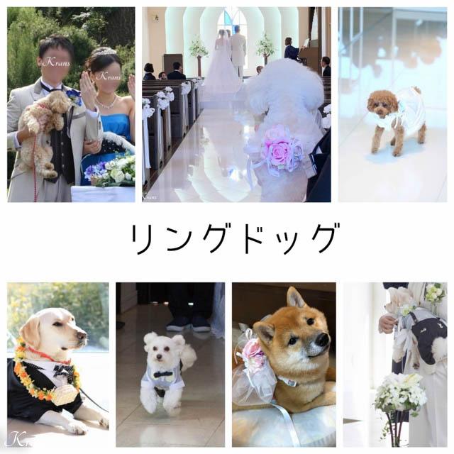 リングドッグ販売結婚式犬