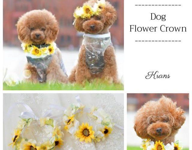 【幸せのバトン:Photo gallery】愛犬用花冠・首飾り N様(くるみちゃん・ラン君)
