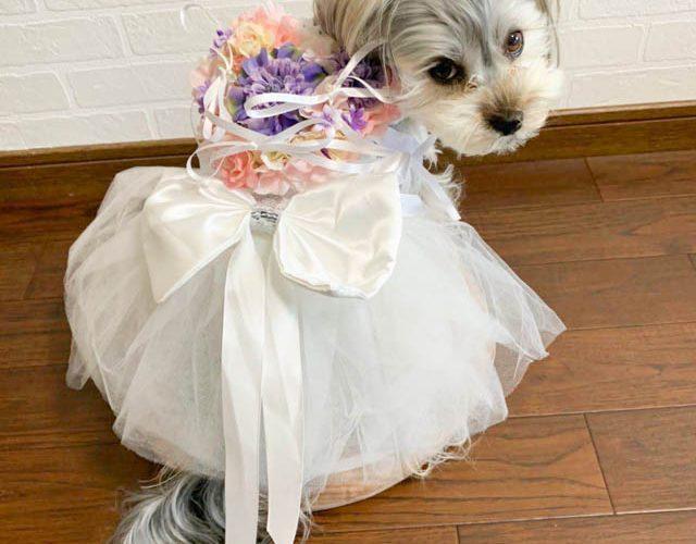 結婚式のリングドッグ