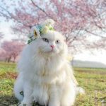猫うさぎ犬ペット用花かんむり