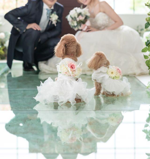 結婚式リングドッグトイプードル