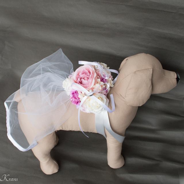 トイプードル結婚式ドレスリングドッグ7